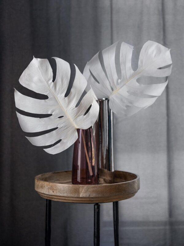 Zwei Trockenblumen Monstera gebleicht in Weiss in einer Vase