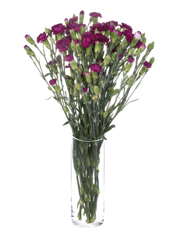 Verzweigte Nelke Kingfisher Special violett als Bund in einer Vase
