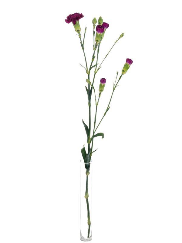 Verzweigte Nelke Kingfisher Special violett einzelner Stiel in einer Vase