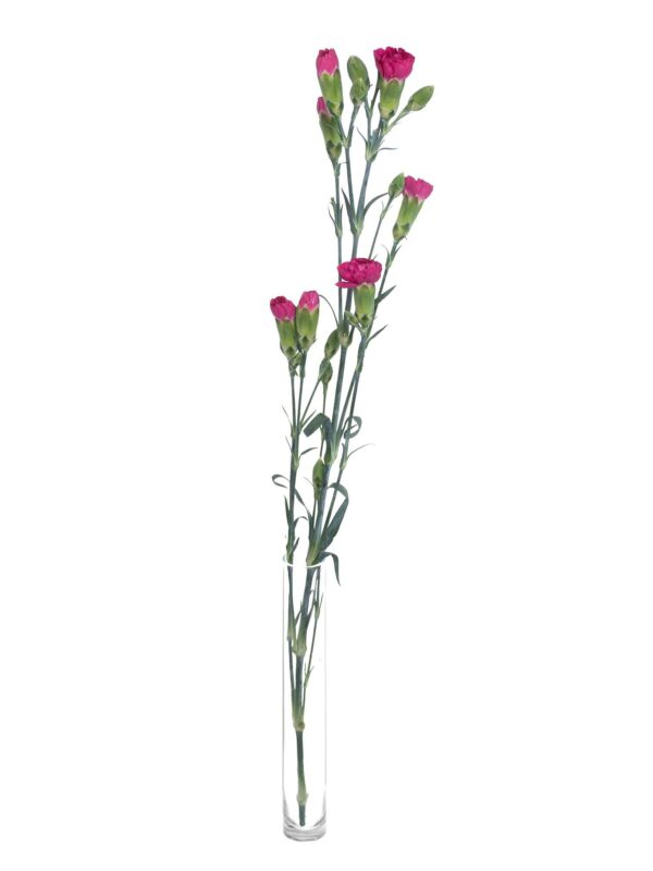 Verzweigten Nelke pigeon pink als einzelner Stiel in einer Vase