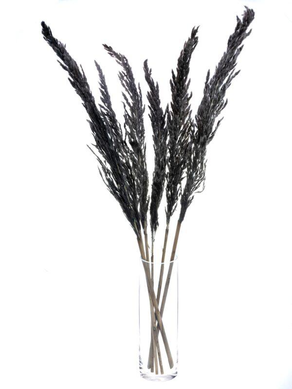 Ein Bund Pampasgras Eryanthus getrocknet und gefaerbt schwarz in einer Vase