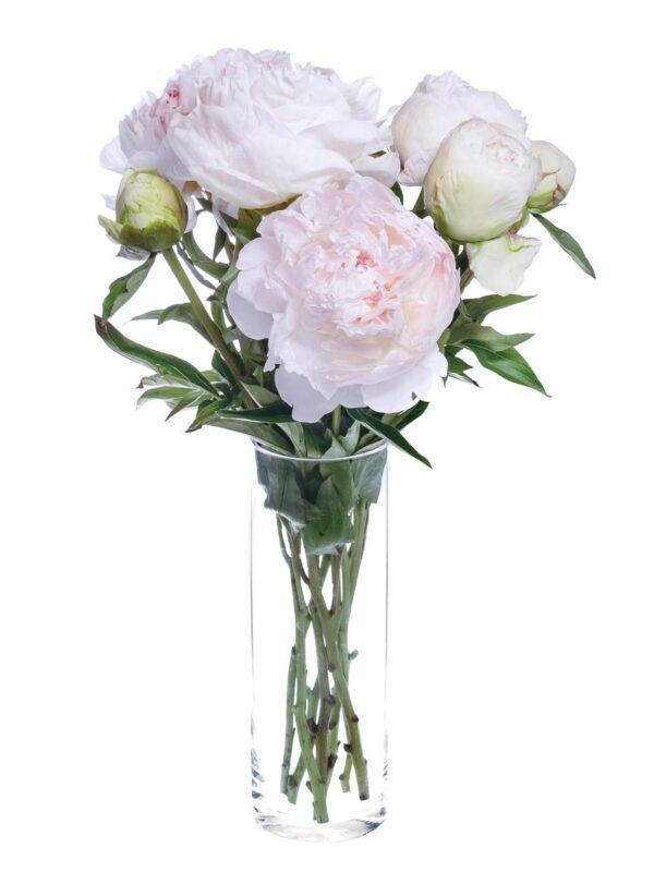 Mothers Choice Pfingstrose in Weiß-Rosa als Bund in einer Vase