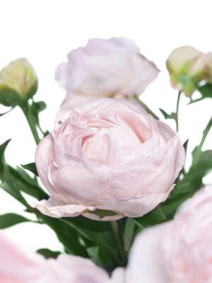 Detailaufnahme der Mothers Choice Pfingstrose in Weiß-Rosa