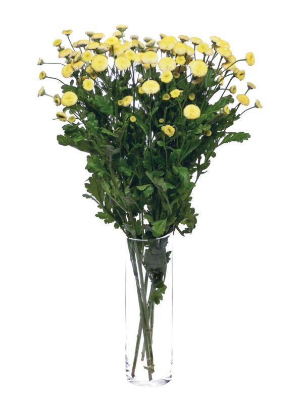 Ein Bund Tanacetum Amazone in Gelb in einer Vase