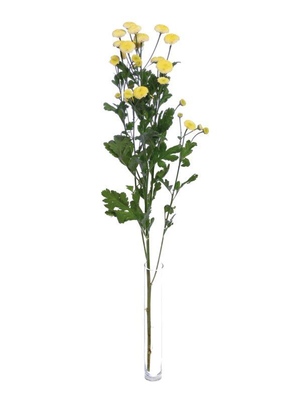 Ein einzelner Stiel Tanacetum Amazone in Gelb in einer Vase