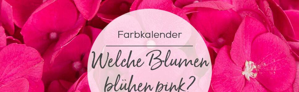 Welche Blumen blühen pink?