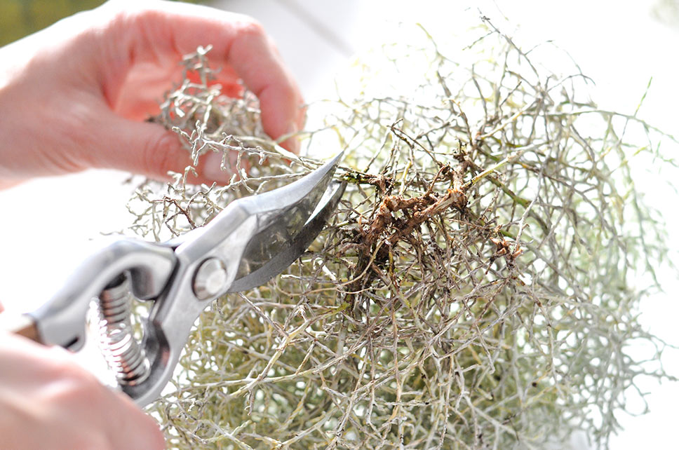 Stacheldraht mit Gartenschere zurechtschneiden