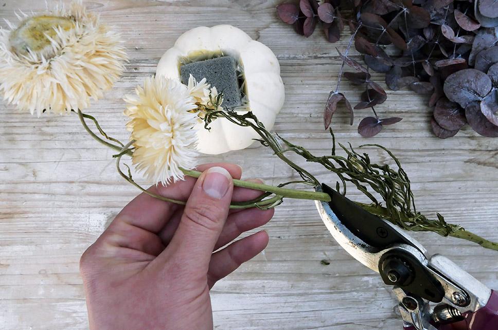 Trockenblumen mit Gartenschere zurechtschneiden