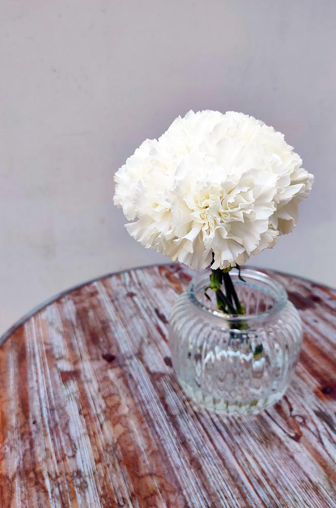 Nelken als Pfingstrosen in Vase
