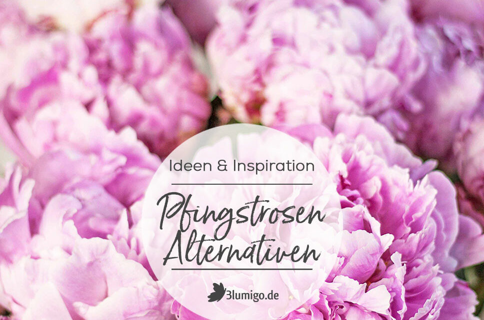 Pfingstrosen Schnittblumen Alternativen